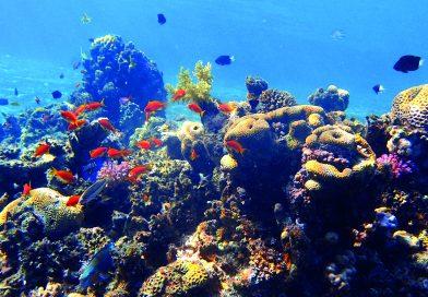 Bland fiskar och koraller i Röda Havet