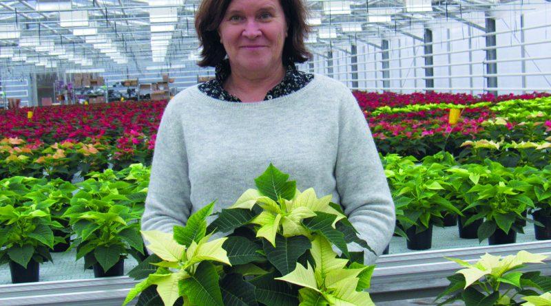 Mångsidiga trender med julblommor och planteringar